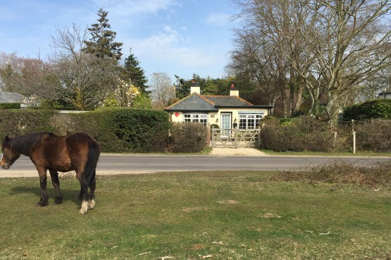 Picturesque Cottage - directly onto the New Forest