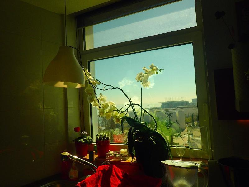 Kitchen's window
