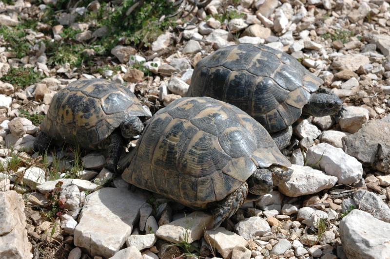 En ladingen van schildpadden!