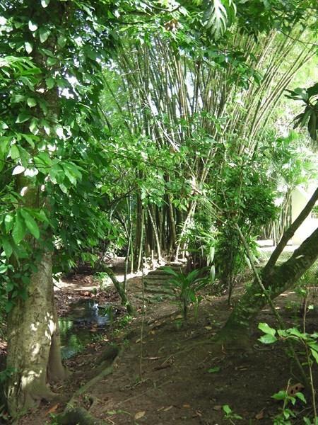 View over the the 'Cañada rio', the garden and the bambous
