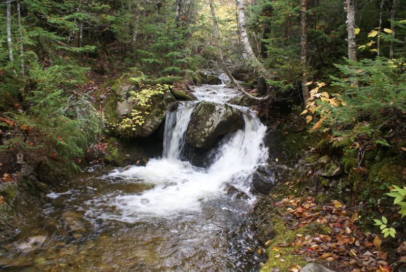 Un arroyo que desemboca en el estanque de Maggie