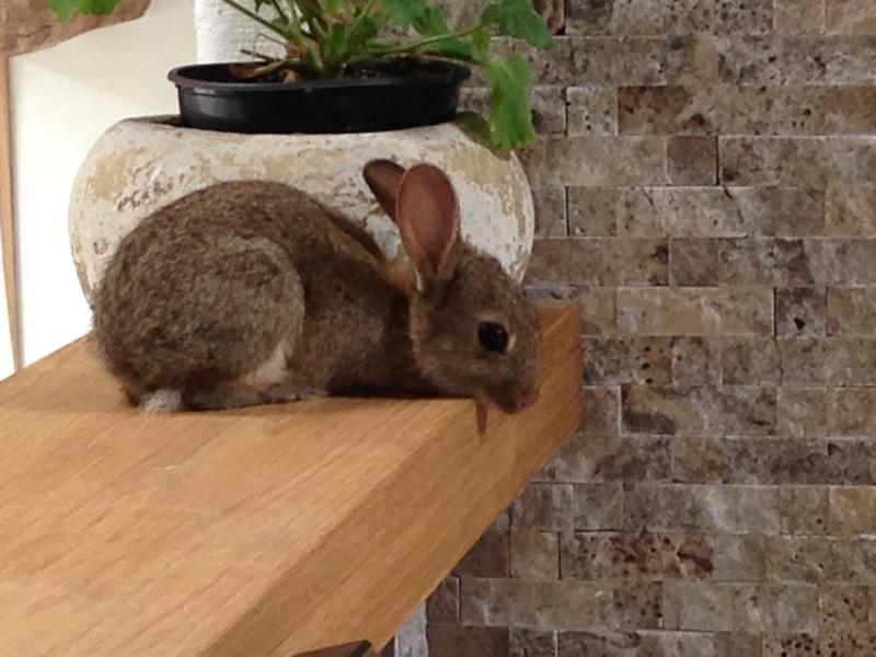 A little uninvited guest investigates the new barn conversion