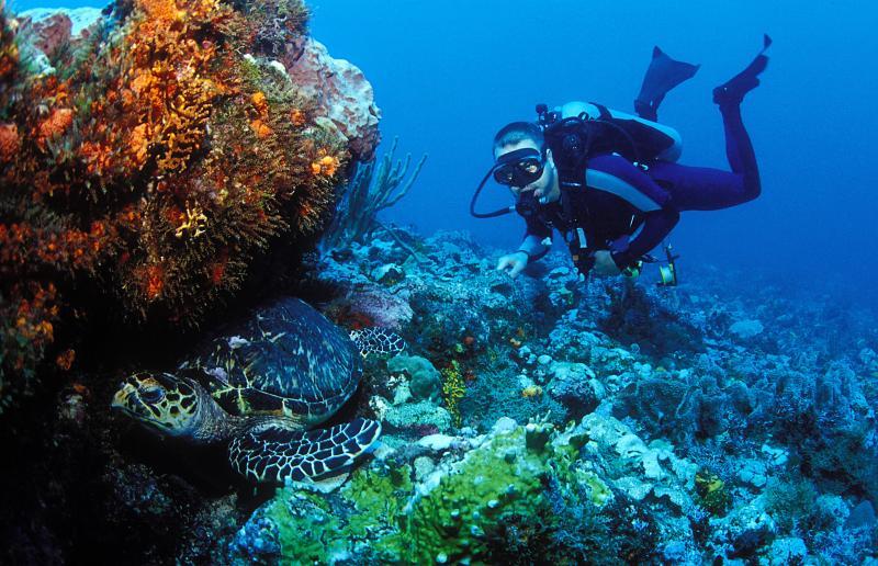 World Class diving destination