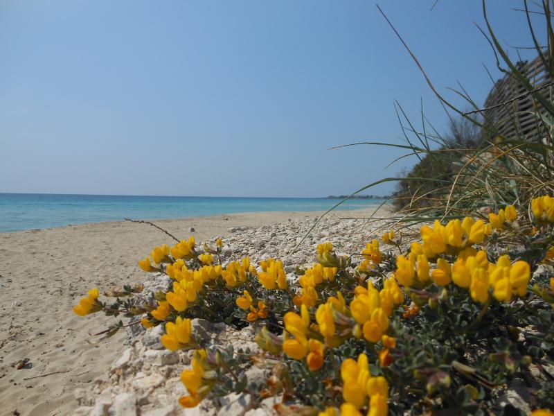 The Beach of Punta Prosciutto-Lido Degli Angeli