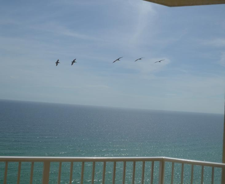 Pelicans (photo taken from our balcony)