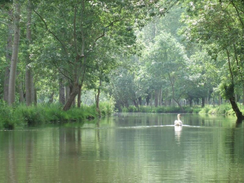 A must: the Marais Poitevin known as the Green Venice. A must: Our Marais Poitevin!