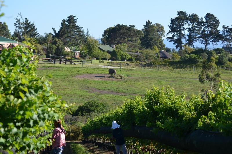 Oogsten whith olifanten op zoek op