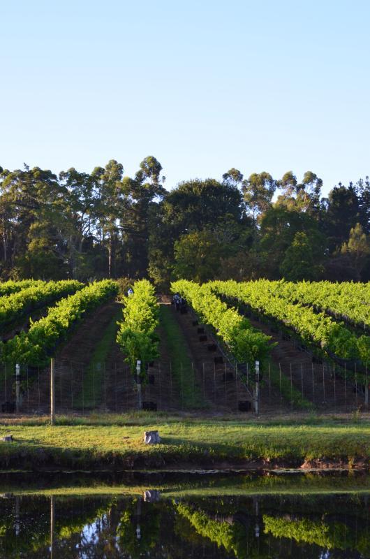 Onze wijngaarden tegenover de dam