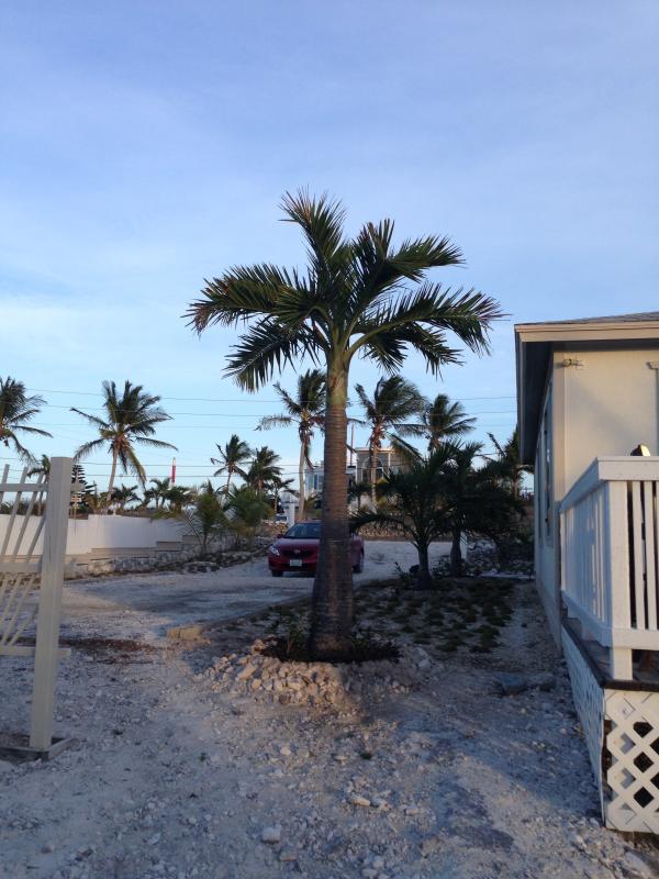 Nyplanterade palmer!