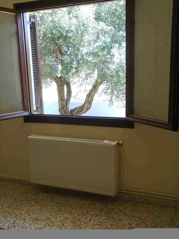 The olive tree outside the bedroom