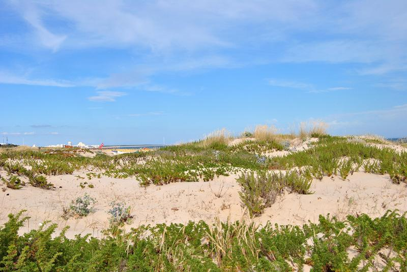 Access to the beach - Dunes
