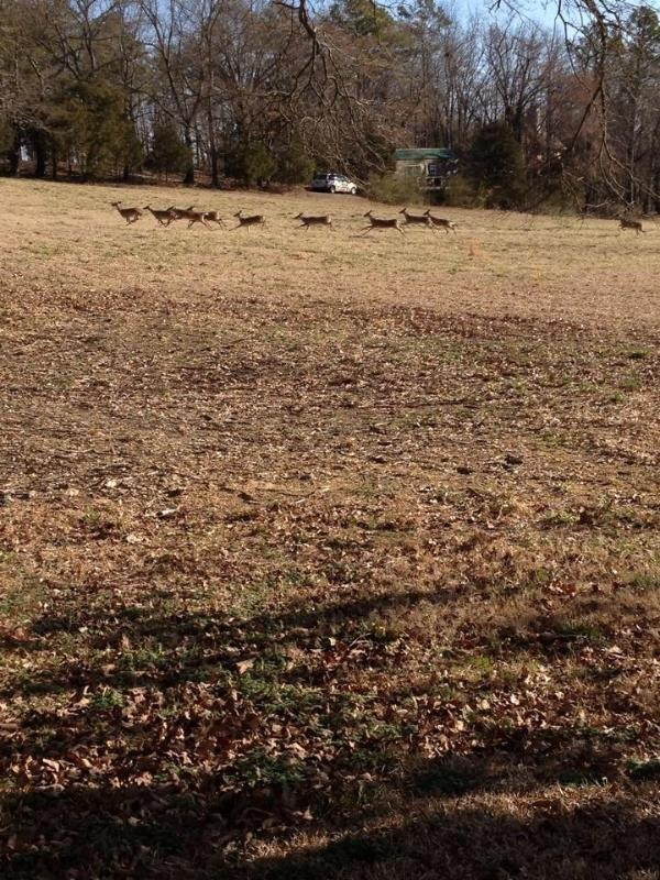 Keep an eye out for deer grazing in the field - view from your patio up to Prairie Creek Cabin