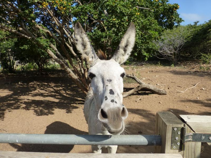 Milagre, um dos burros que precisava de nossa ajuda muito desesperadamente...