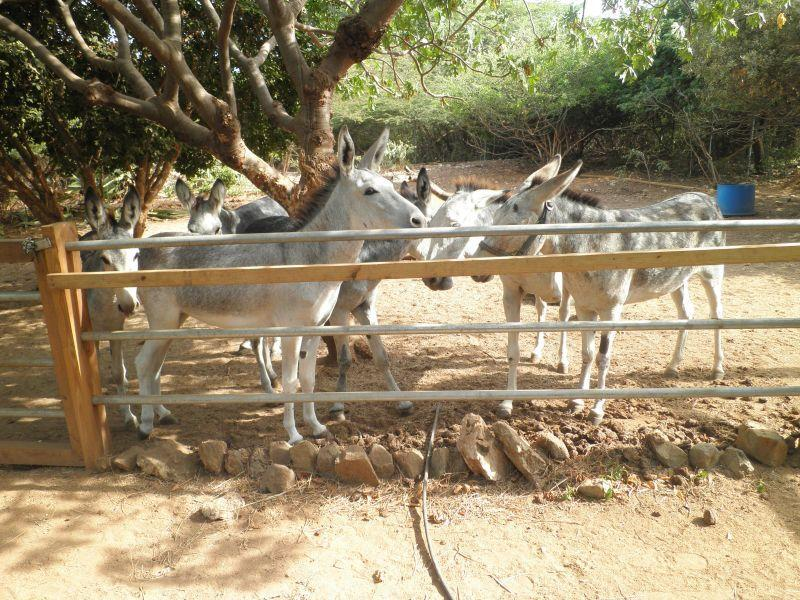 The donkeys in the back yard, close to this apartment
