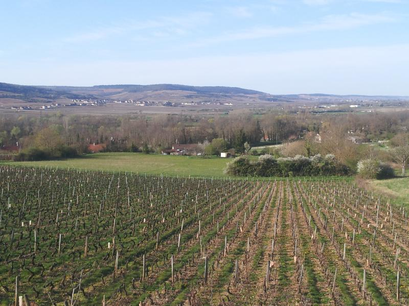 The Nearby Vineyards Of Santenay 800meters Away Where You May Start Cycling /Walking From