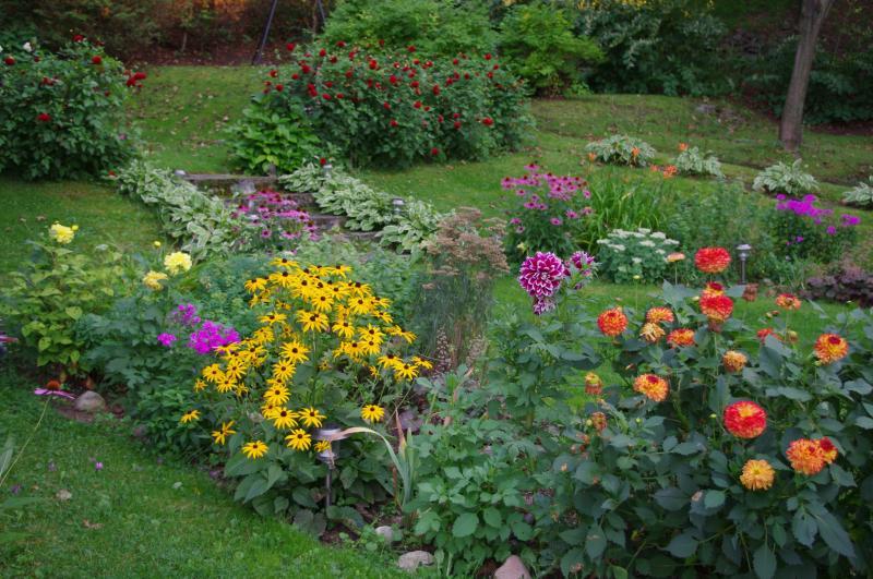 cours arrière et fleurs