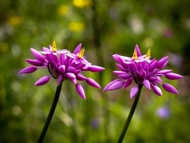 Wildflowers in season