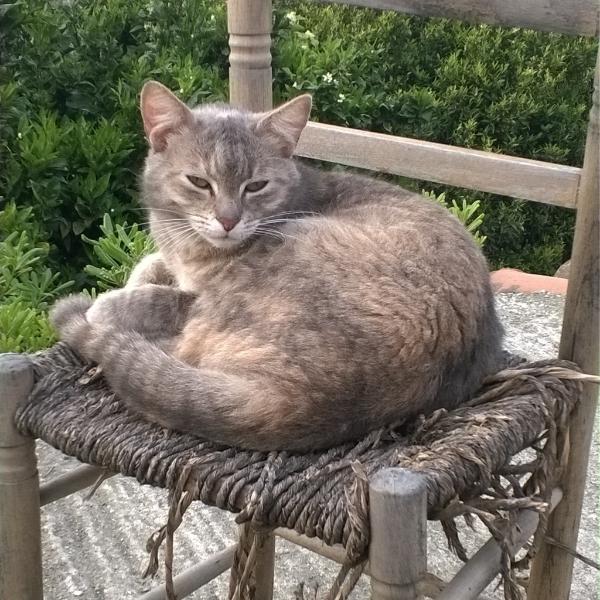 Giada, la mia gatta