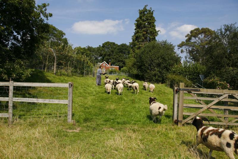 Woodend Gateway Sheep