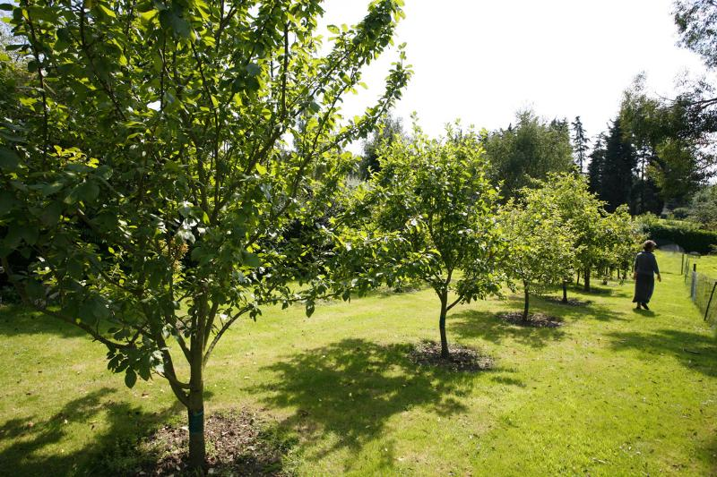 Woodend Orchard