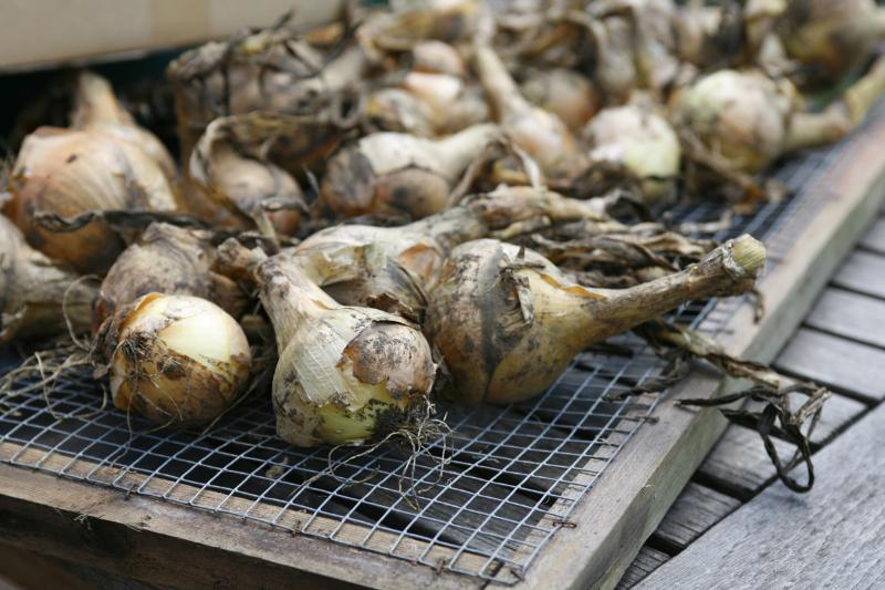 Woodend Onions