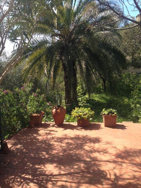 Garden (relax zone)