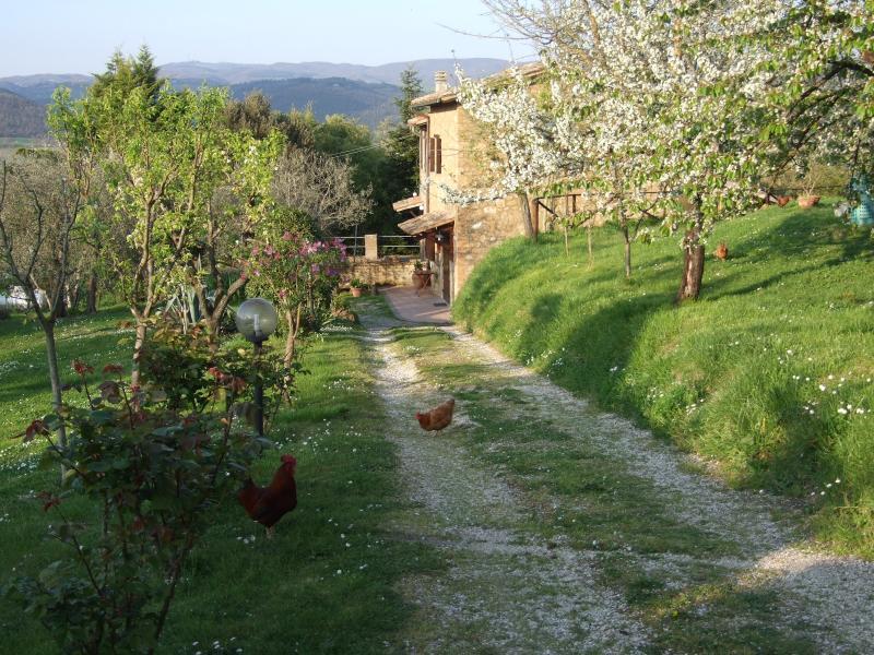 Country house for holidays Podere 'La Vigna', location de vacances à Orvieto