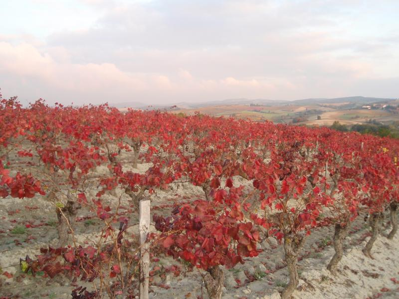 The autumn colours of the vines are a sight to see