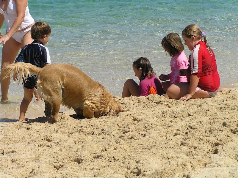 Dog beaches 3 min walk from beach house