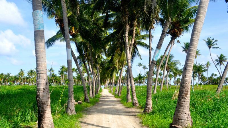 Vaavu Road