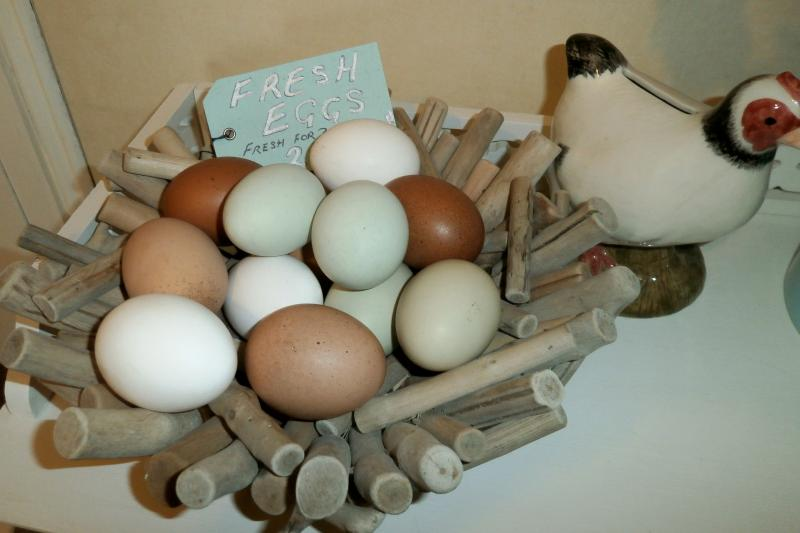 Delicious fresh eggs often available to guests from our own chickens