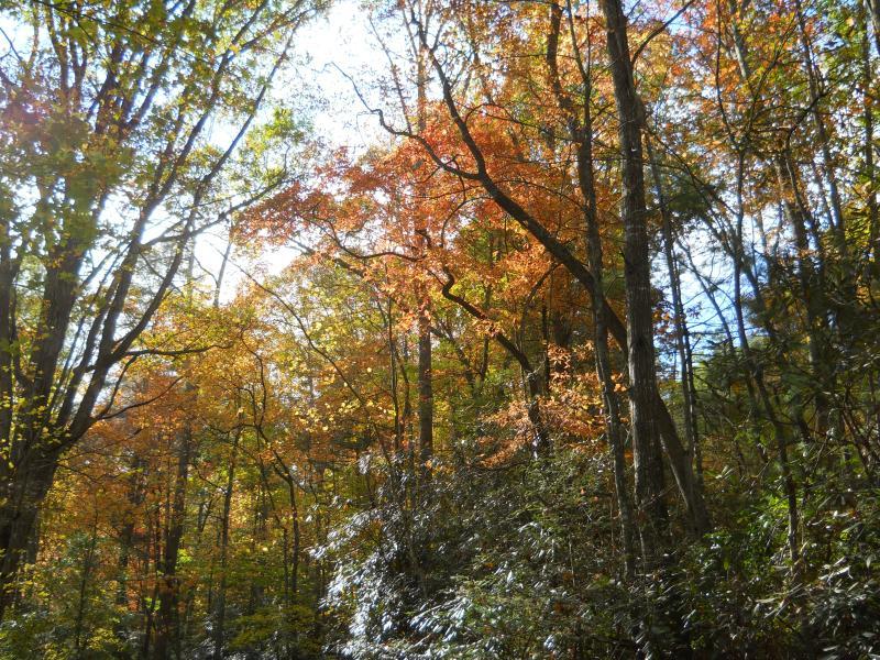 Elk seizoen is uniek in de bergen.