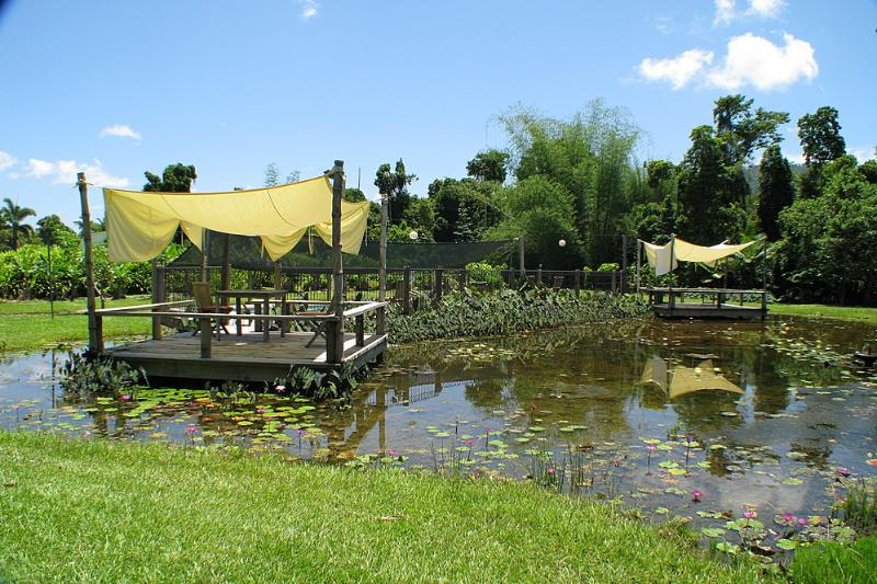 Lillypads Cottages-Lilly Lagune Pool