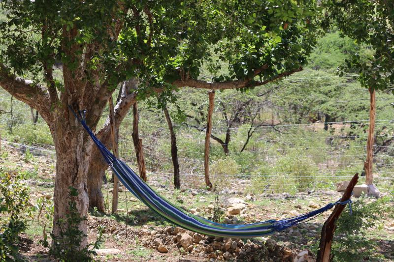 Choose an afternoon of reading under the shade of the lignum vitae tree as you enjoy the breeze.