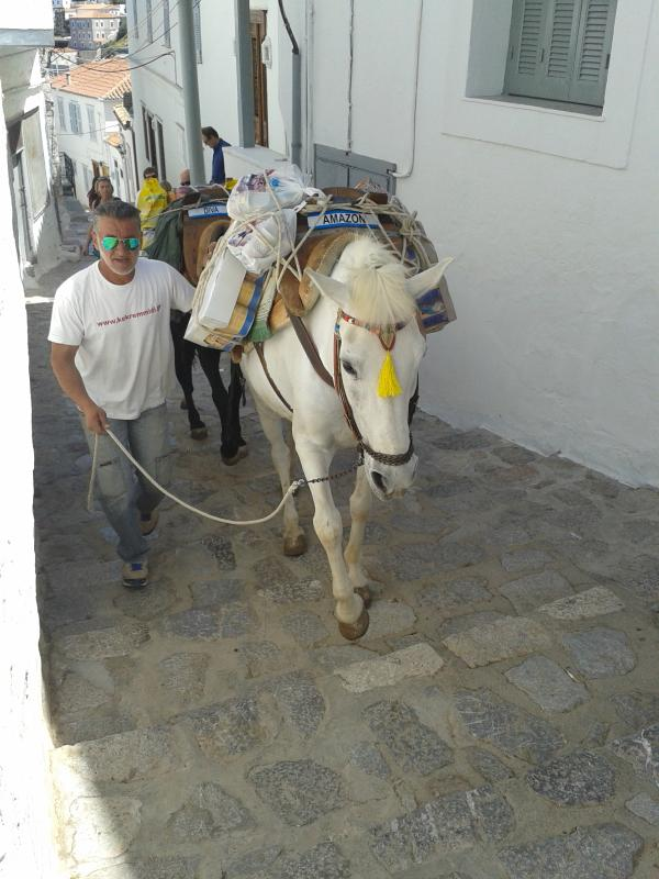Traditional transportation in Hydra!