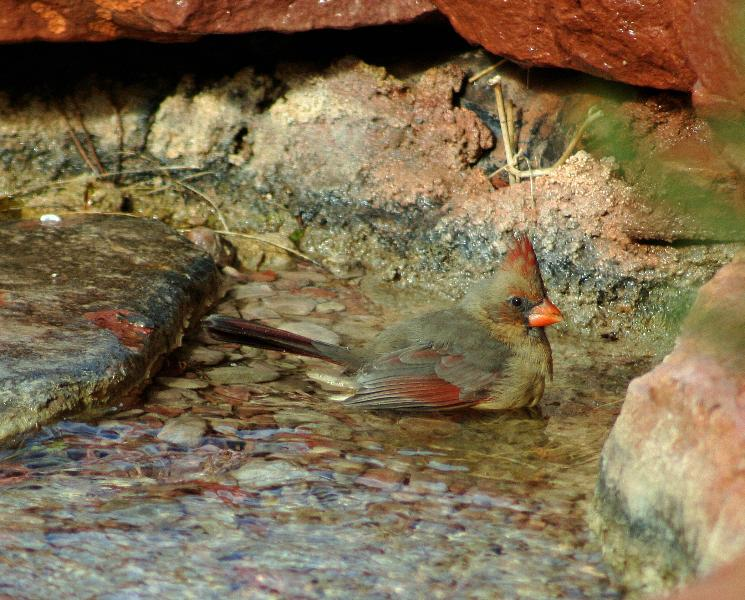...and his mate, which loves to bathe in the little creek