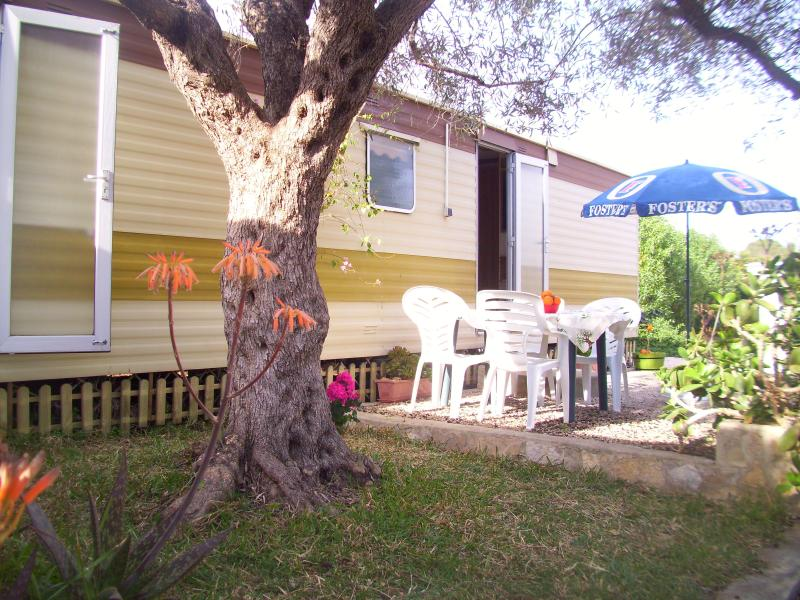 Olive-Finca Gamundi, holiday rental in Terres de l'Ebre