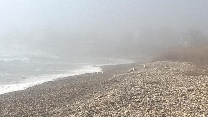 Rocky Beach in fog.  Short walk access at Nichols / Calef or from Aunt Carries.