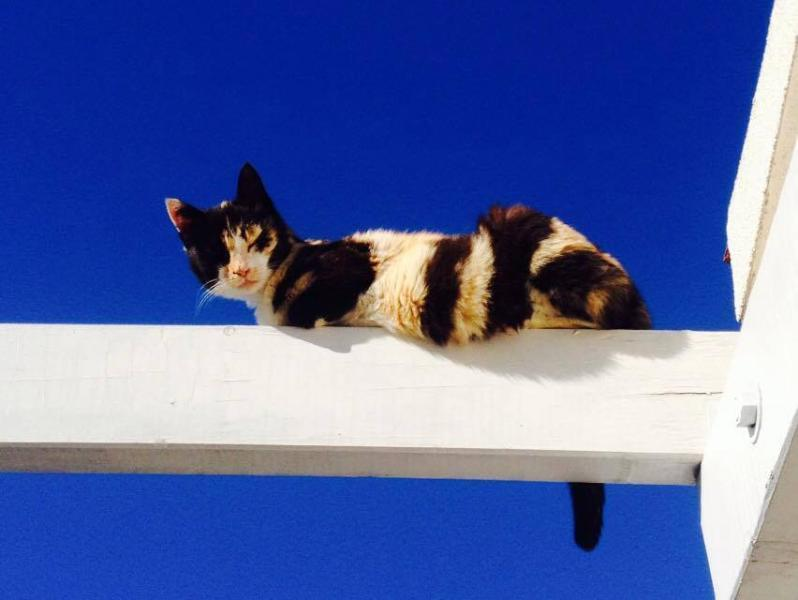 cats are our regular visitors, if you are pet friendly you are welcome to Villa Vergo