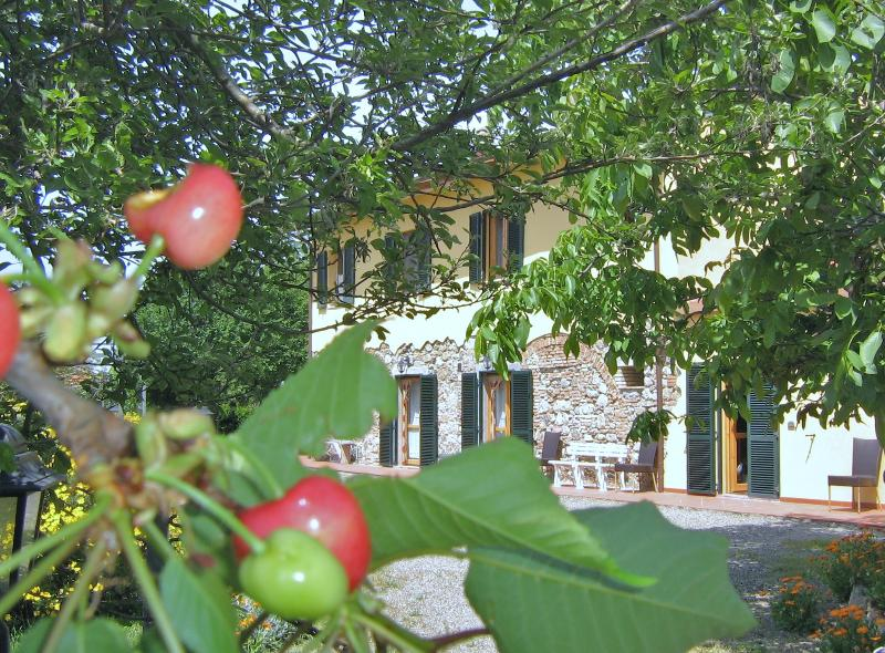 Agriturismo Il Gelso - 3room apartment  Tuscany the sea, cities of art, vacation rental in Pieve di Santa Luce