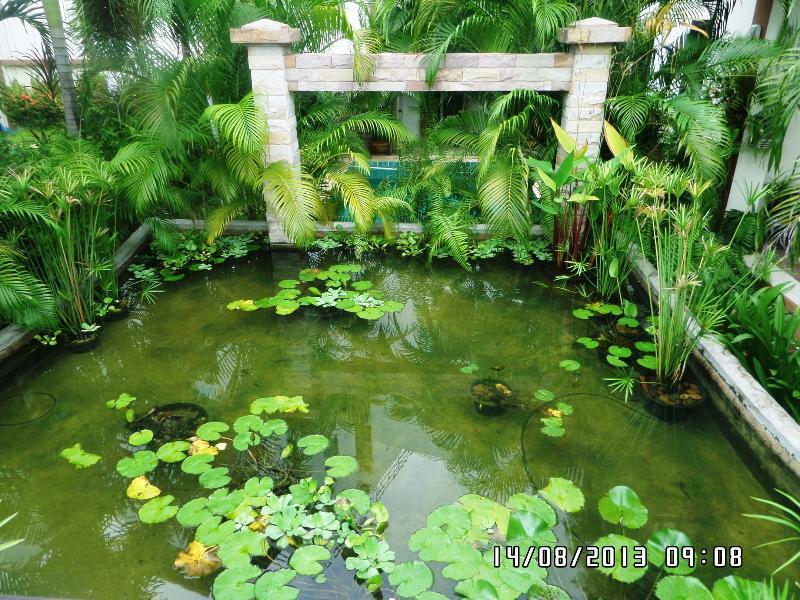 Koi pond & waterfall....