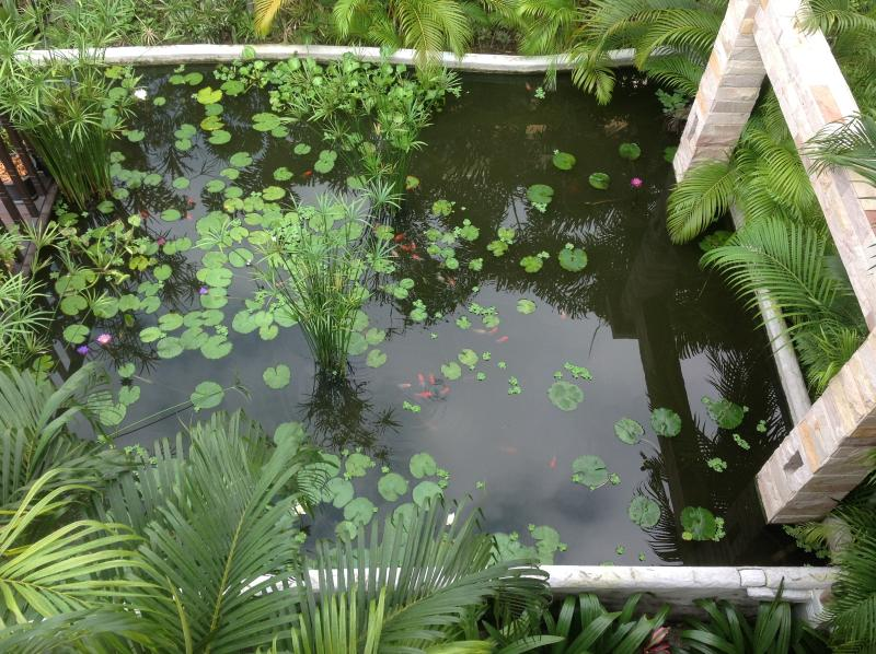 Pond view from third floor level....