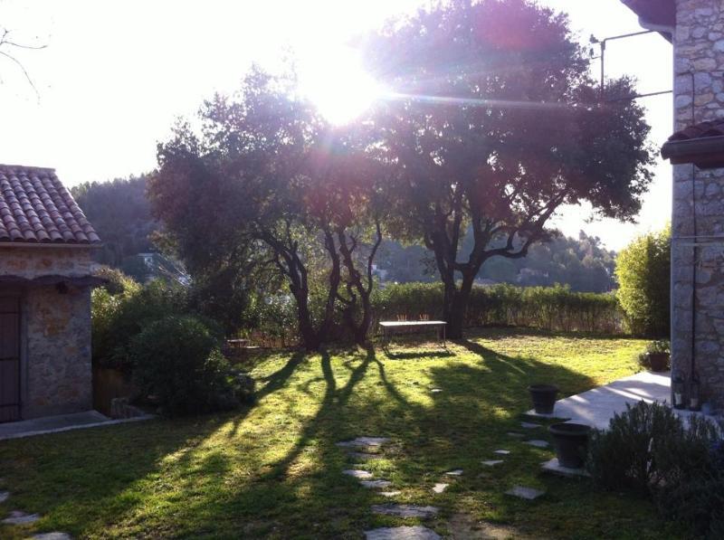 The morning garden