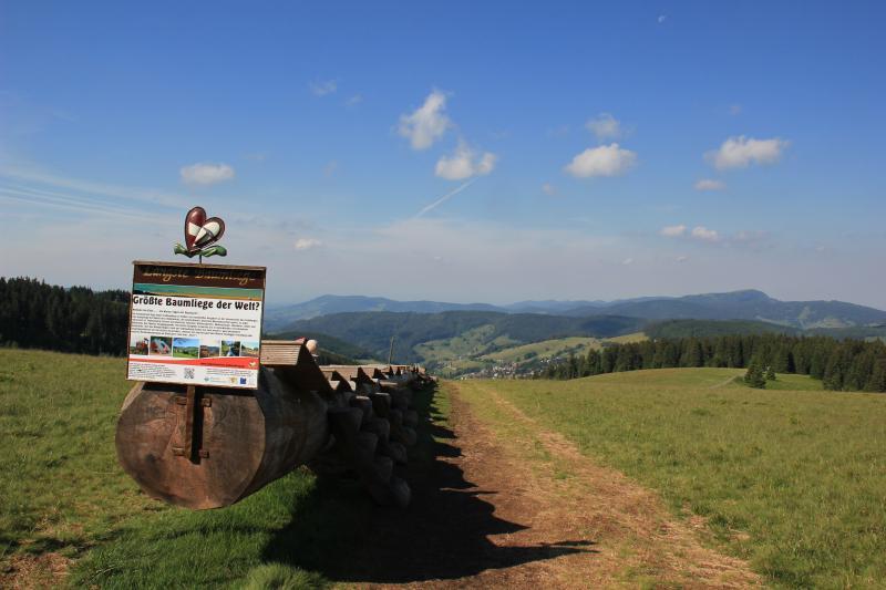 Feldbergturm im Schwarzwald