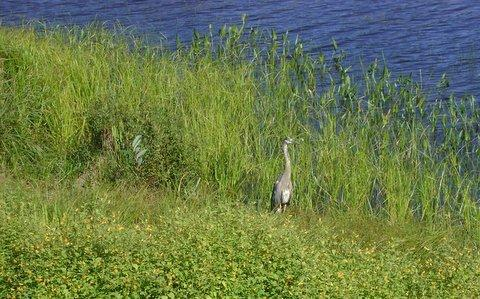 Some wildlife down at the waters edge by the beach