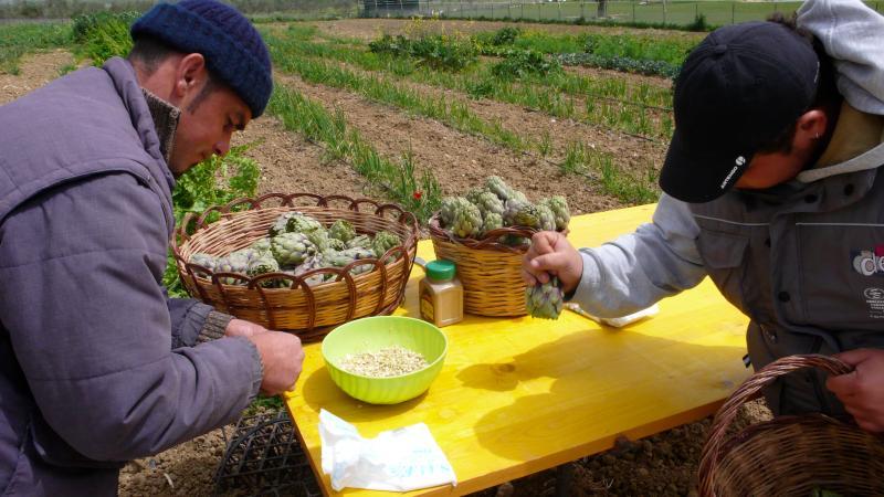 Preparazione dei carciofi da cuocere sulla brace