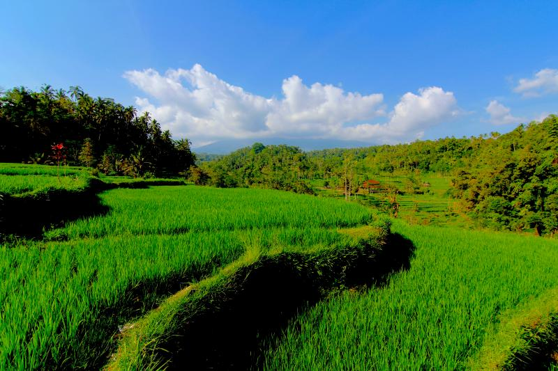Beautiful Ricefield Location.
