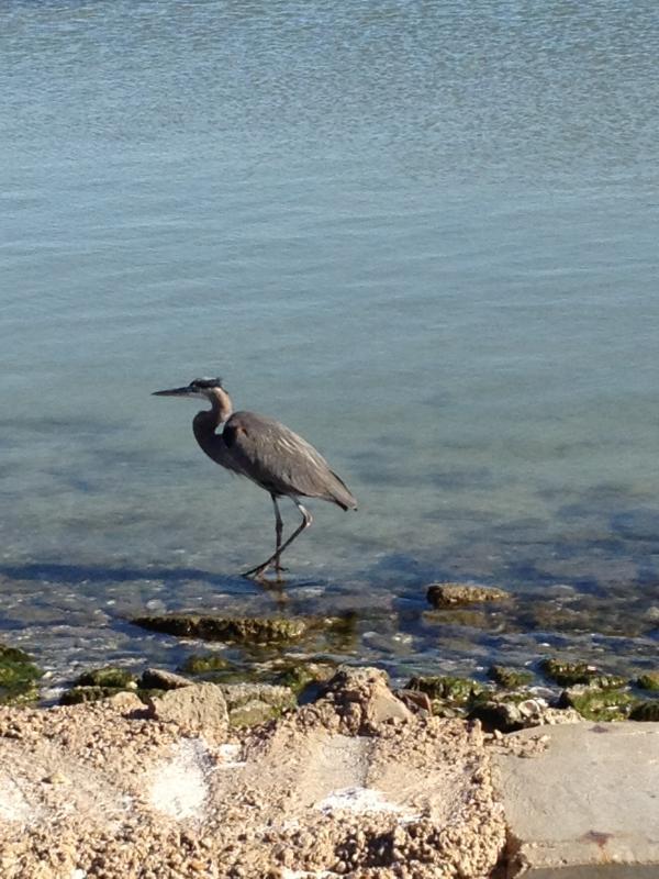 Do some birdwatching