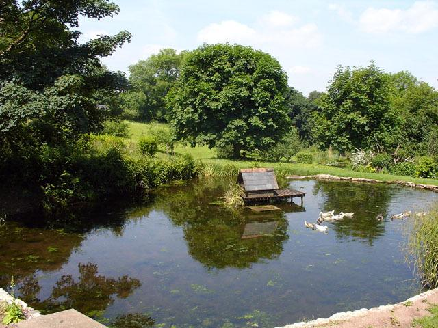 Pond in the communal gardens