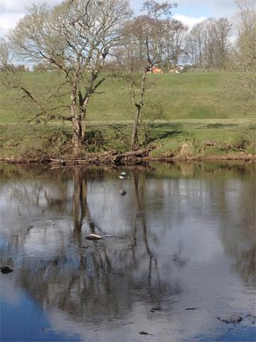 Look closely and you'll see the Heron